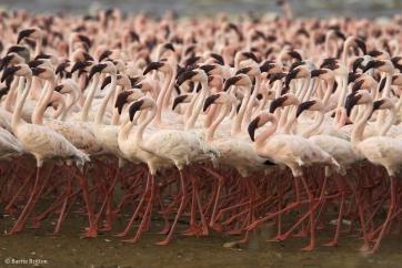 flamingo-lg-copy